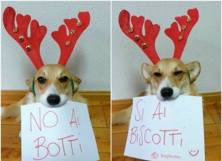 botti petardi cani