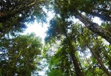 foresta bosco