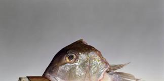pesce sigaro Erwitt