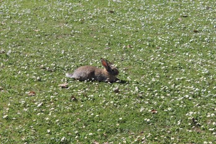 conigli al parco urbano Forlì