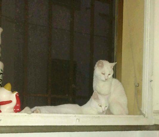 i gatti di Maria Letizia Zuffa
