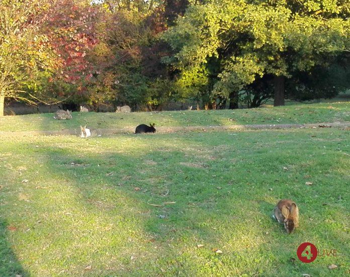 Conigli al Parco Urbano