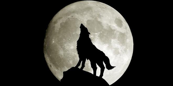 licantropi-lupi-e-vampiri
