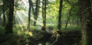 Francesco-Lemma-AquaMigrans-Foresta-della-Lama-bosco