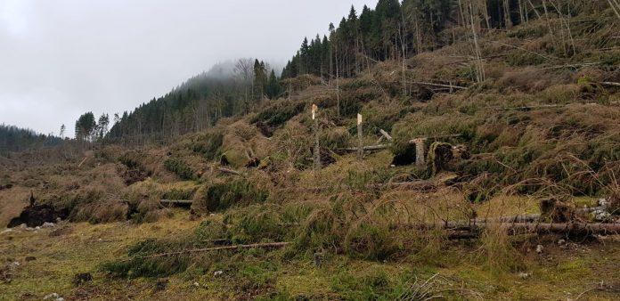 alberi-caduti