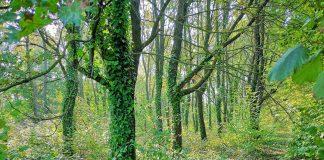 bosco-della-Cava-foto-di-Paolo-Ambrosini