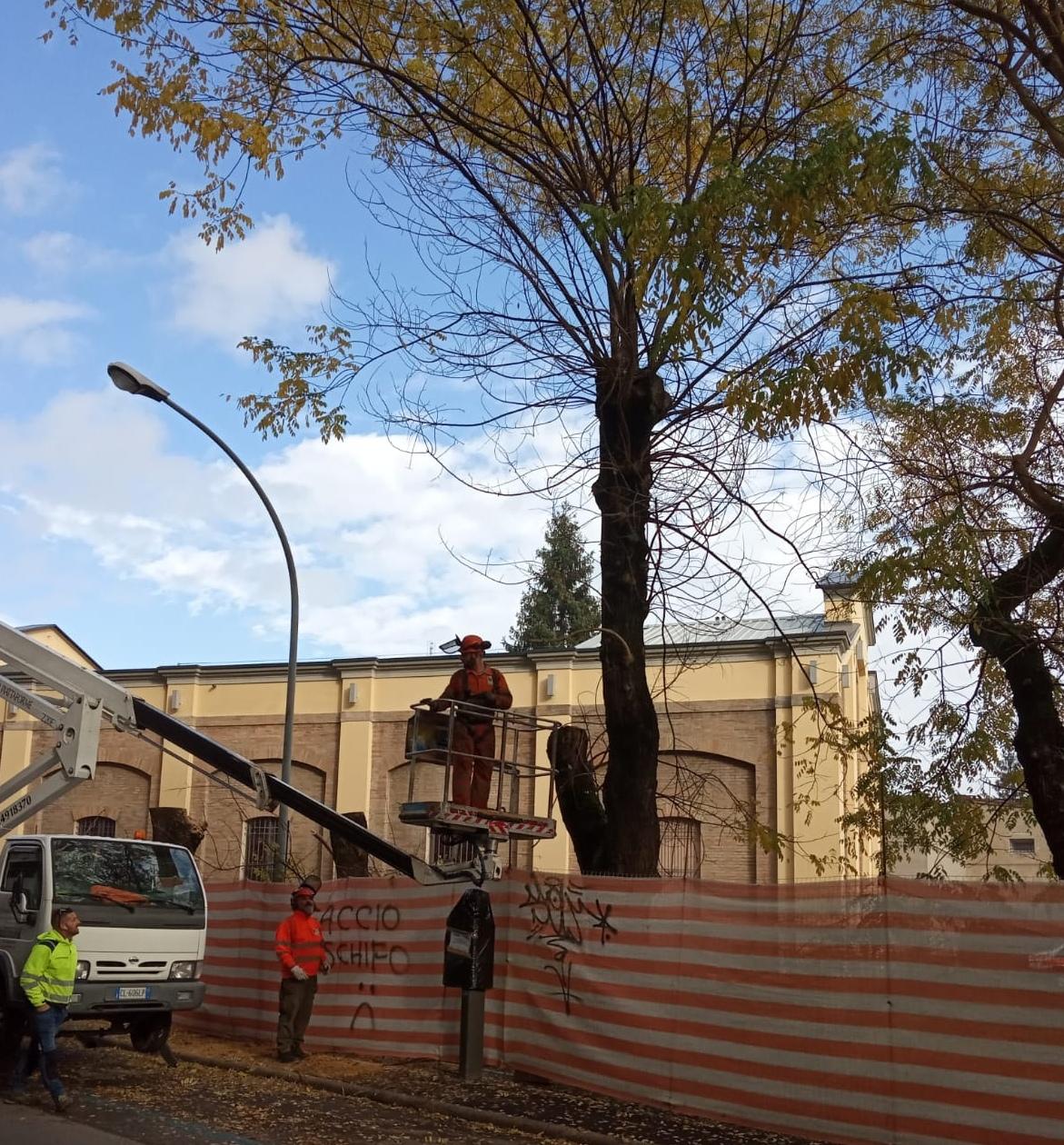 Immagini Di Piante E Alberi mezzacapo: «effettuate potature di alberi pericolanti e