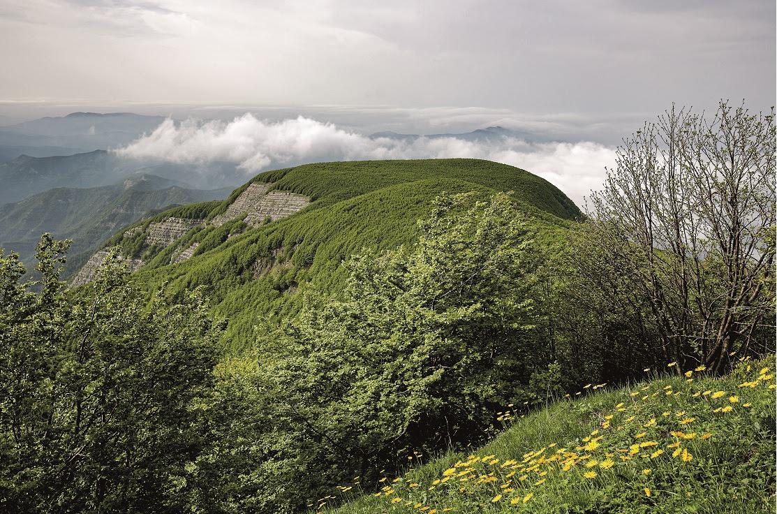 Campigna-Foreste-Casentinesi