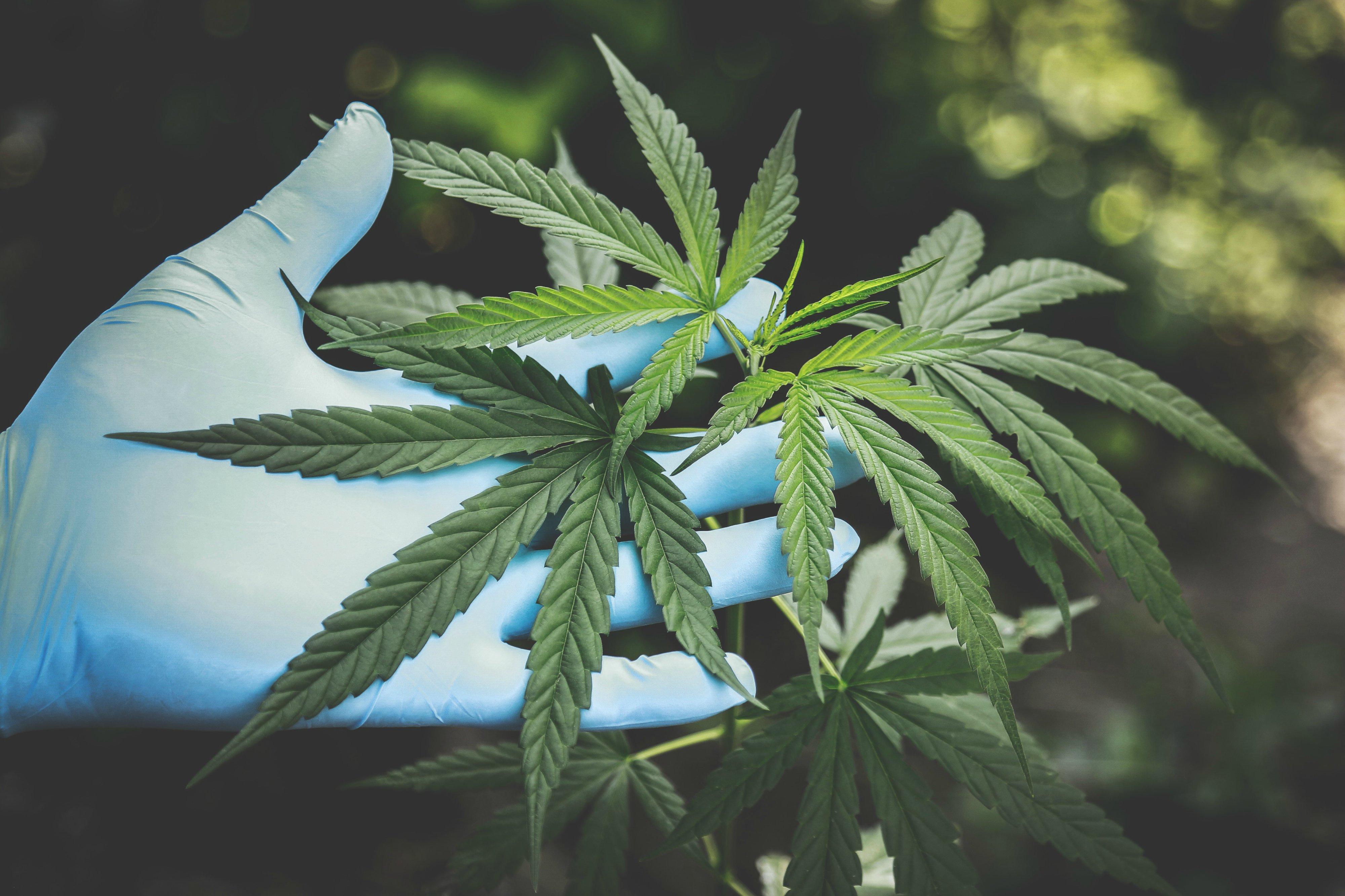 Cannabis-legale