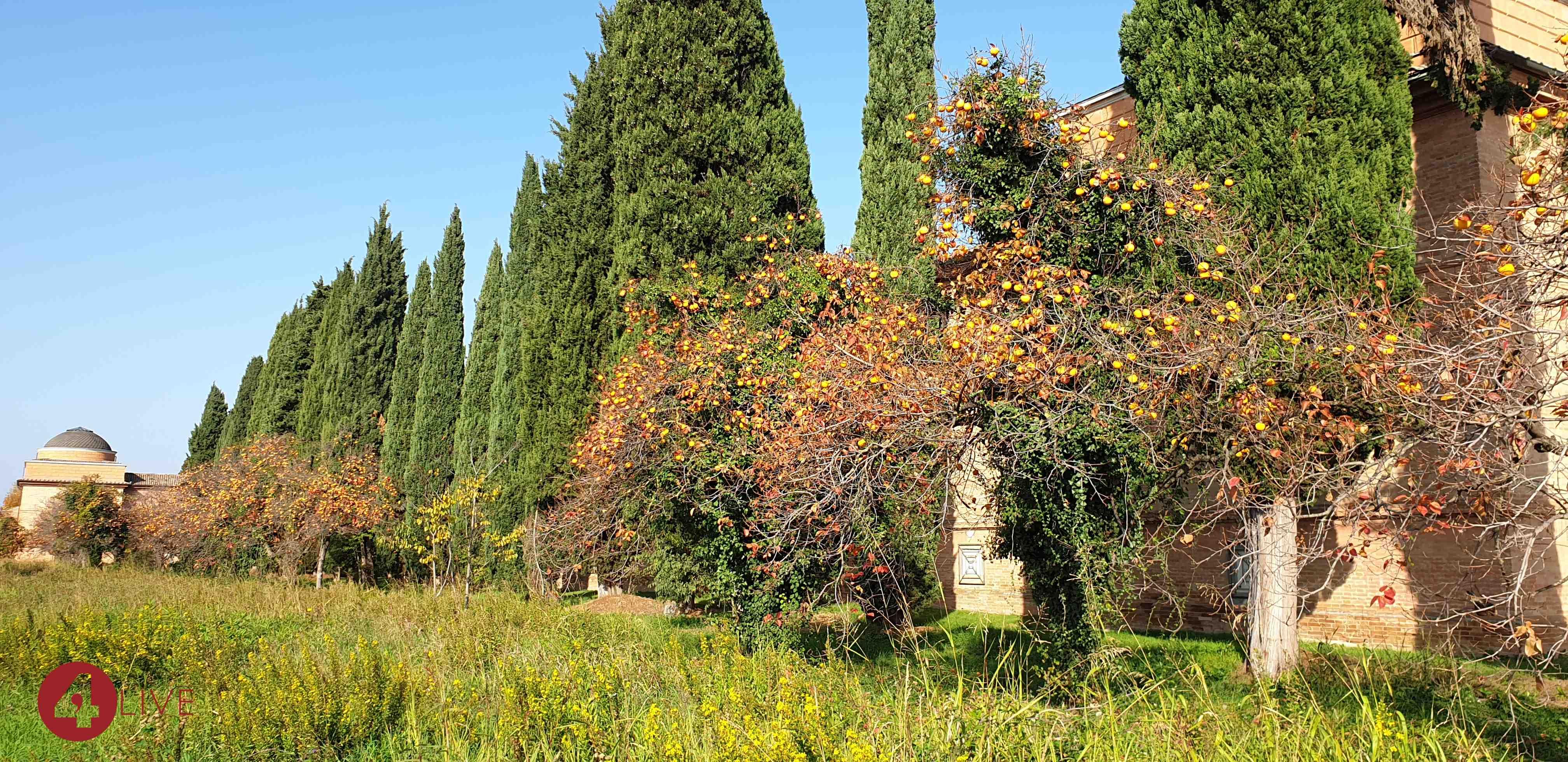 cachi-al-cimitero