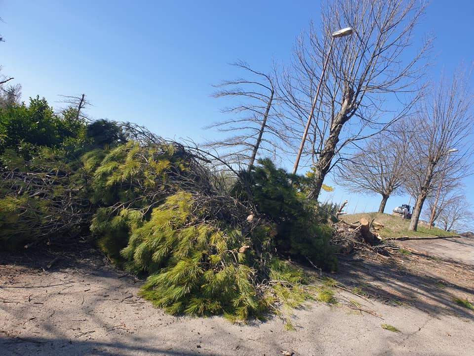 spinello alberi abbattuti