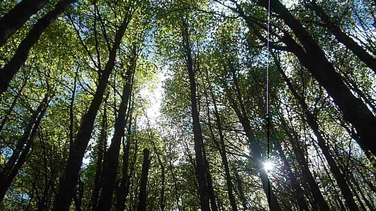 Bosco alberi a Monte Falco