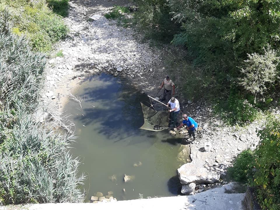 pesci salvati dall'asfissia a Modigliana