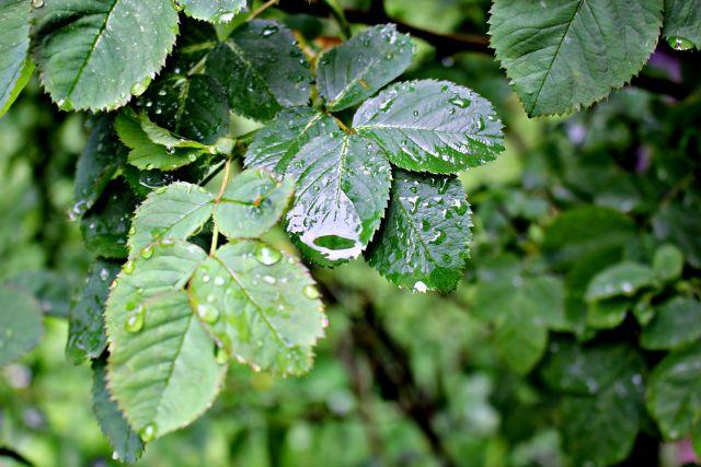 6 июня в Петербурге прогнозируют ливневые дожди