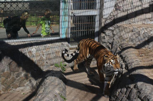 Вход в Ленинградский зоопарк для детей сделают бесплатным 1 июня