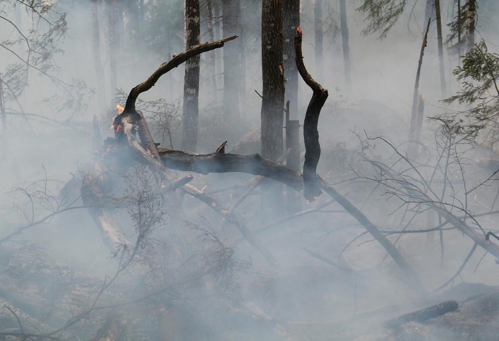 За лето в Ленобласти произошло более 200 лесных пожаров