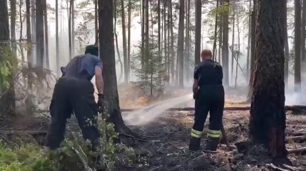 Спасатели больше суток тушат лесной пожар в Сосновом Бору