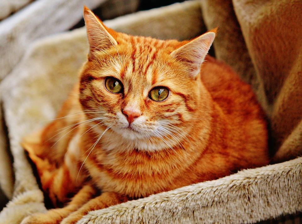 Беглов выделил более 4 млн рублей на частные приюты для бездомных животных