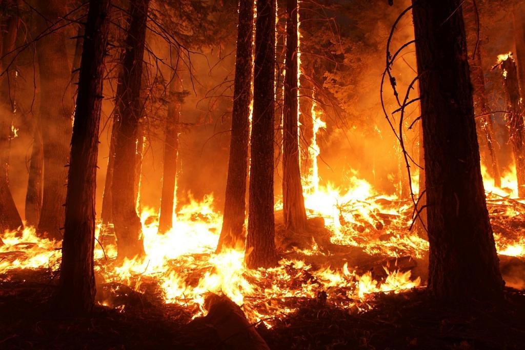 Молодой пожарный погиб при тушении огня в лесу Тихвинского района