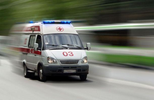Три человека пострадали после столкновения легковушки с лосем в Ленобласти