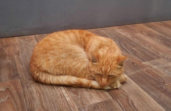 Разыскиваемый всем Петербургом кот Ося вернулся в Музей Анны Ахматовой