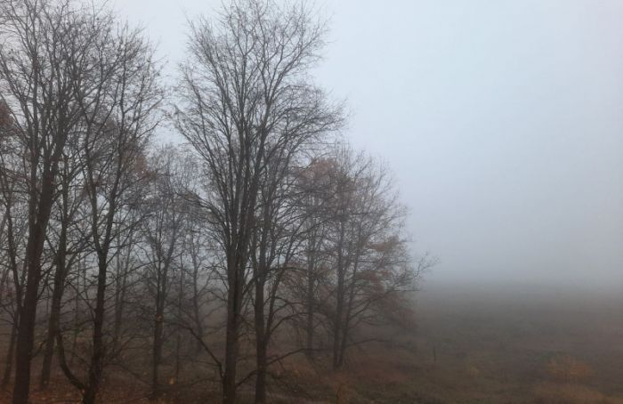 Утром в Петербурге ожидается туман