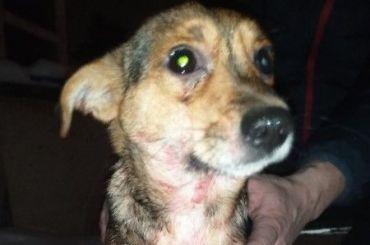 В Кингисеппе хозяева маленькой собаки выбросили ее в пакете из окна