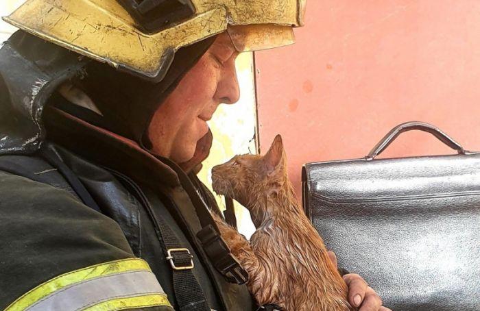 Сотрудники МЧС спасли кота после пожара на Лиговском проспекте