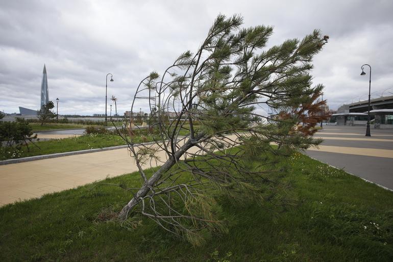Петербуржцам рассказали, что принесший шторм «двугорбый циклон» отступит к ночи субботы