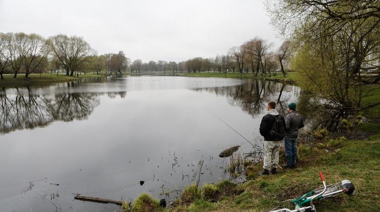 Из ручья в Муринском парке выловили мертвую пенсионерку