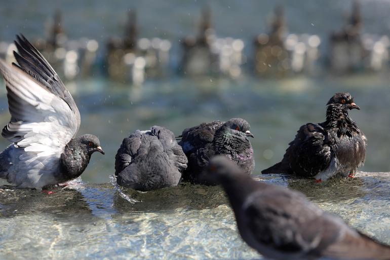 Тротуар у Гостиного двора засыпало трупами голубей
