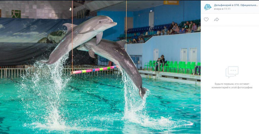 В Петербурге закроется единственный дельфинарий