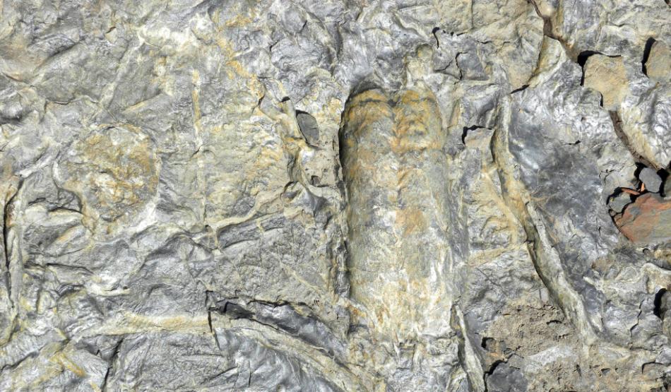 Под Петербургом откроют палеонтологический парк с древними окаменелостями