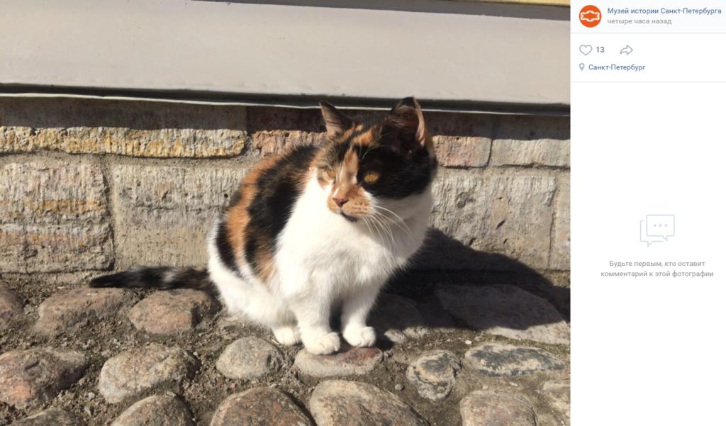 Трижды была замужем и 20 лет охраняла Петропавловский собор: что известно об умершей кошке Капитолине