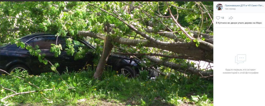 Субботний ураган повалил в Петербурге 75 деревьев