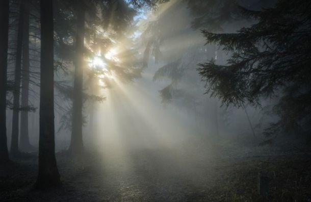 Петербуржцы наблюдали в декабре солнце 2,5 часа