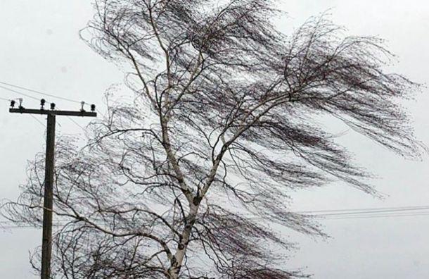 Из-за сильного ветра в Санкт-Петербурге объявили желтый уровень погодной опасности