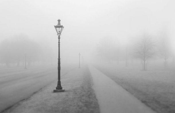 МЧС предупредило петербуржцев о тумане