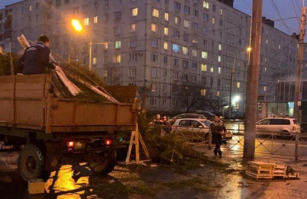 Незаконный елочный базар ликвидировали в Купчине