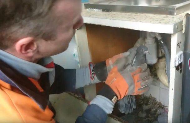Специалисты спасли голубя, который провалился в вентиляционную шахту