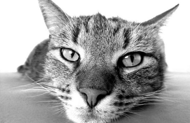 Санкт-Петербург попал в топ-3 самых добрых городов для беспородных кошек