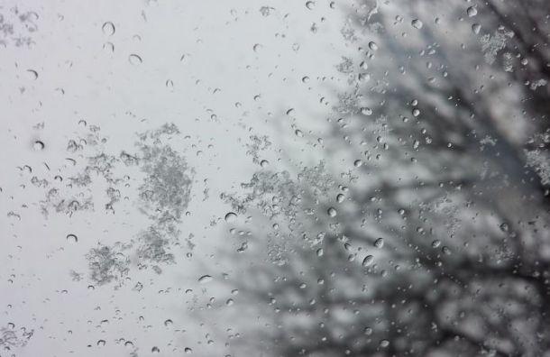Дождь со снегом пообещали петербуржцам 8 октября