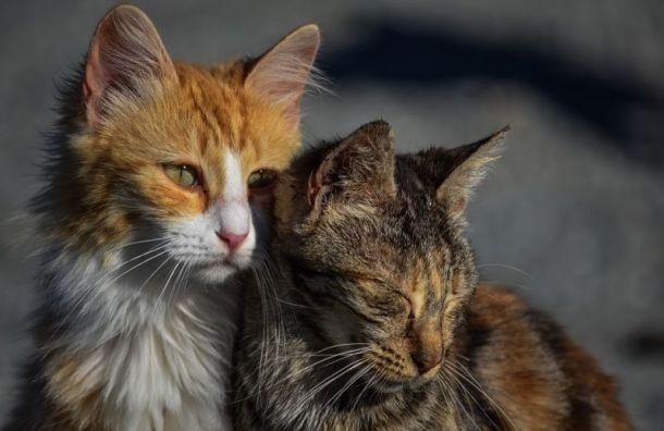 Бездомных животных могут начать отправлять в дома престарелых