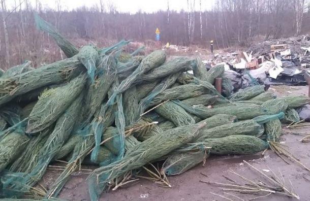 Петербуржцы возмущены свалками из нераспроданных елок