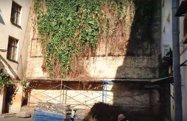 Коммунальщики срубили знаменитую виноградную лозу в переулке Пирогова