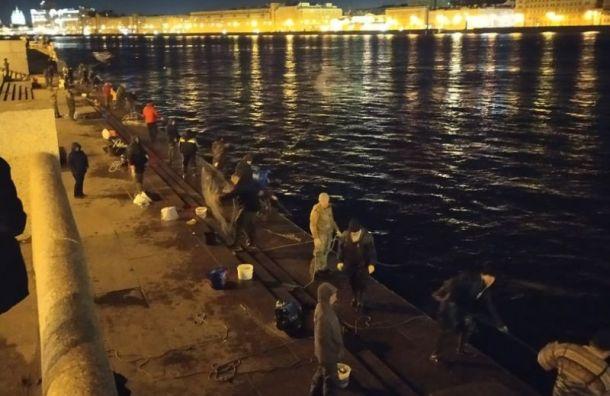 «Цирк, а не самоизоляция»: десятки рыбаков ночью вышли на ловлю корюшки
