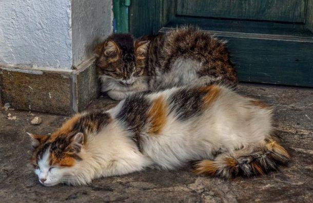 Смольный обратил внимание на проблему бездомных животных