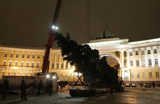 Главную елку на Дворцовой установят за 4 млн руб.