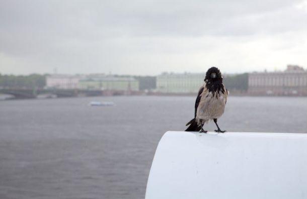 Петербуржцев предупреждают о штормовом ветре и дождях