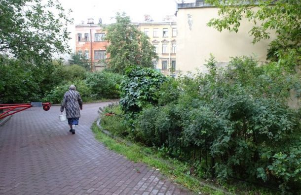 Смольный поддержал идею оценивать обеспеченность зелеными зонами